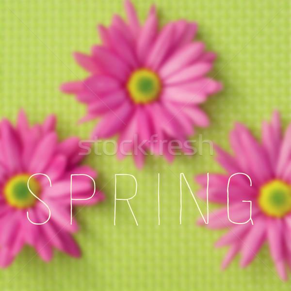 gerbera daisies and the word spring Stock photo © nito