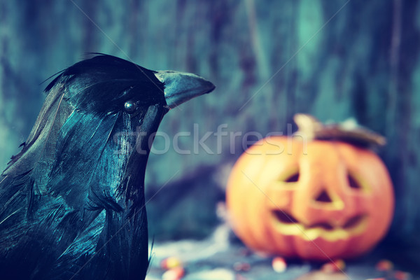 crow and carved pumpkin Stock photo © nito