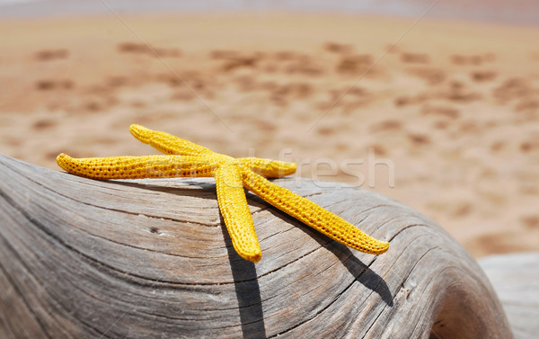 yellow starfish on an old washed-out tree trunk on the beach Stock photo © nito