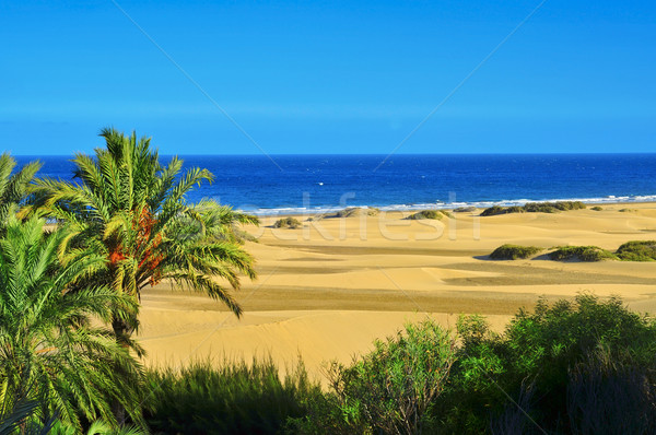 Stock photo: Natural Reserve of Dunes of Maspalomas, in Gran Canaria, Spain