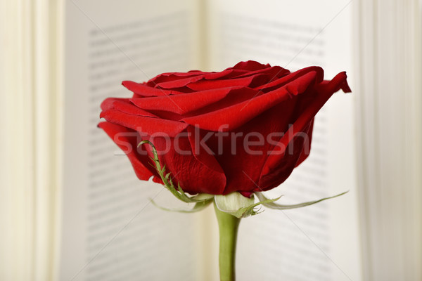 Rote Rose offenes Buch Name Tag Stock foto © nito