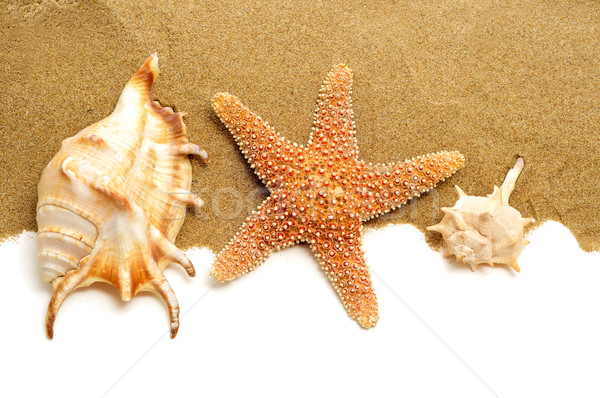conch shells and starfish on the sand Stock photo © nito