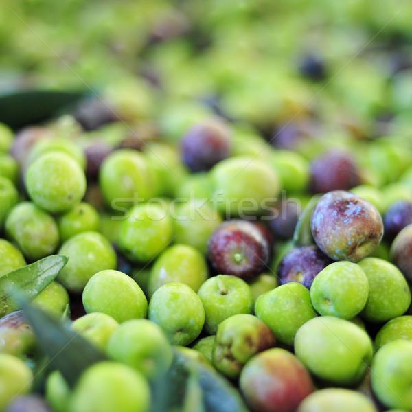arbequina olives Stock photo © nito