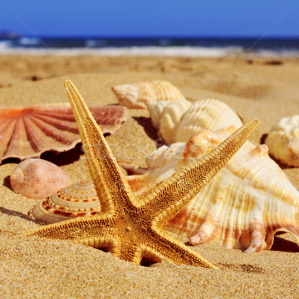 starfish and seashells on the sand of a beach Stock photo © nito