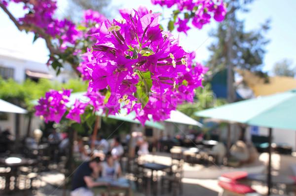 Veranda ada İspanya mor çiçekler Stok fotoğraf © nito