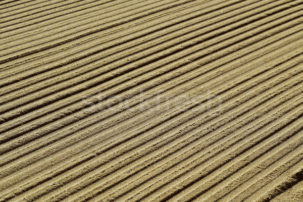 striped pattern in the sand Stock photo © nito