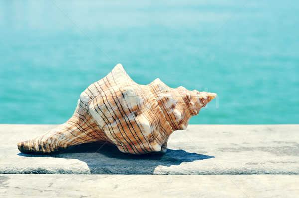 conch on an old wooden pier on the sea, with a filter effect Stock photo © nito