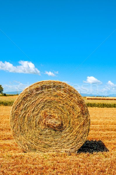 round straw bale in a crop field in Spain after harvesting Stock photo © nito