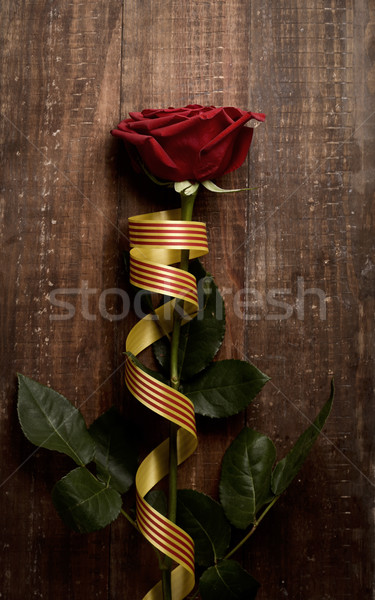 red rose and catalan flag Stock photo © nito