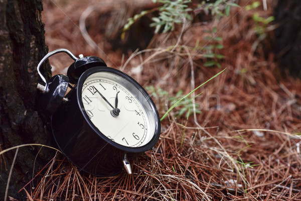 alarm clock in a forest in autumn Stock photo © nito