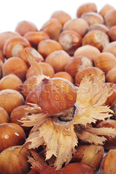 Mogyoró kagyló köteg fehér gyümölcs háttér Stock fotó © nito