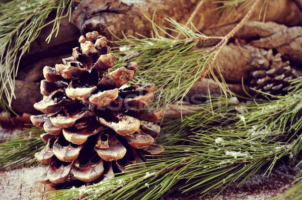 сосна филиала соснового Сток-фото © nito