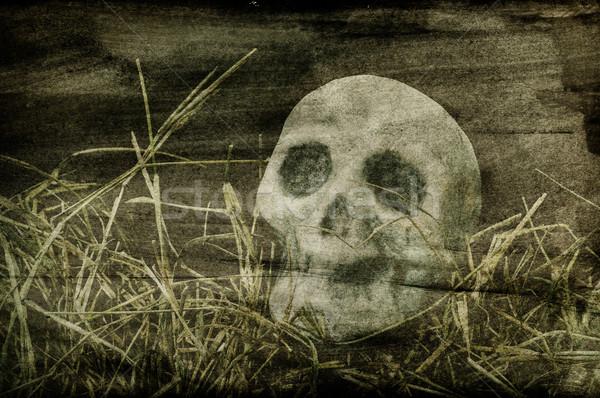 Czaszki przerażający trawy cmentarz strony oczy Zdjęcia stock © nito