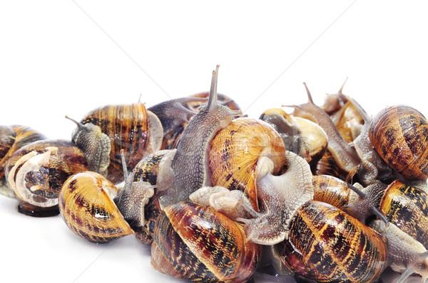 Stock photo: land snails