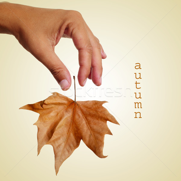 autumn, with a retro effect Stock photo © nito