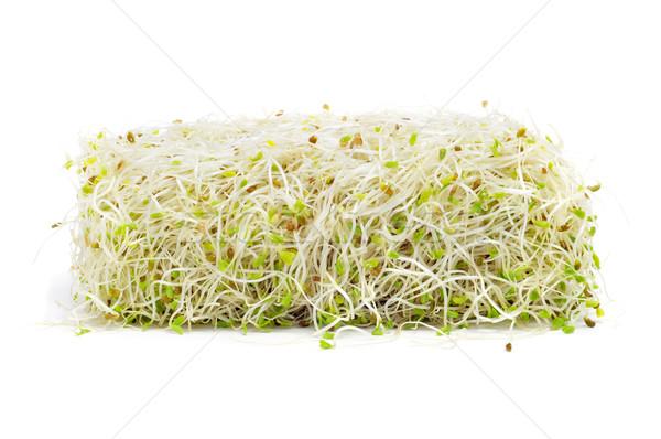 Alfafa verde salada planta alimentação Foto stock © nito