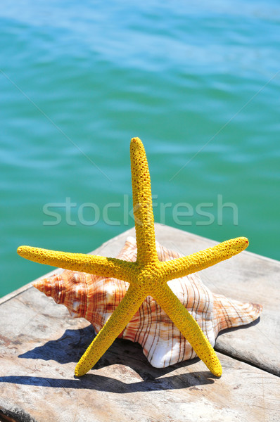 starfish and conch on a wooden pier Stock photo © nito