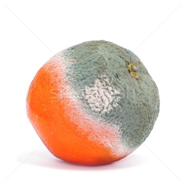 moldy orange Stock photo © nito