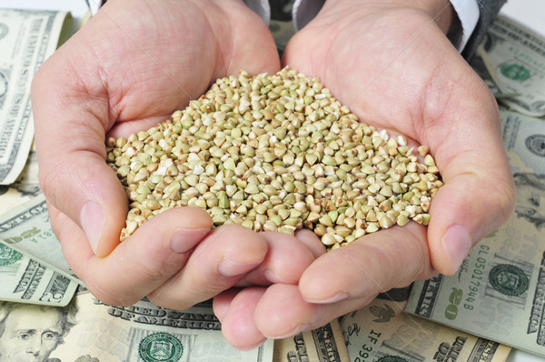 buckwheat seeds and dollar banknotes, depicting the agribusiness Stock photo © nito