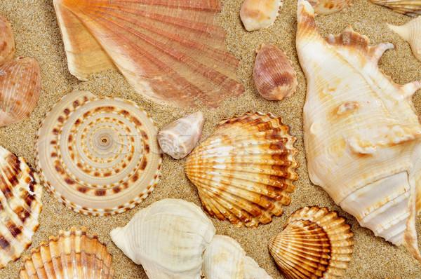 Conchiglie sabbia spiaggia primo piano mare estate Foto d'archivio © nito