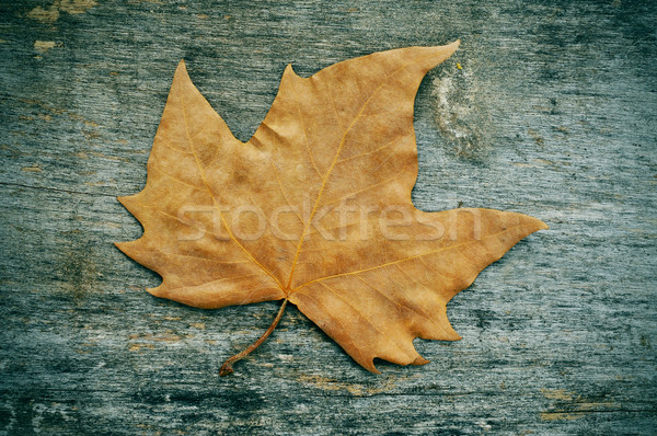 autumn leaf on a weathered wooden background Stock photo © nito