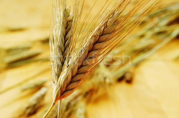 Buğday kulaklar olgun gıda yaz Stok fotoğraf © nito