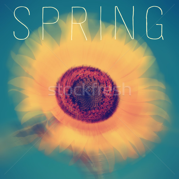 sunflower and the word spring Stock photo © nito