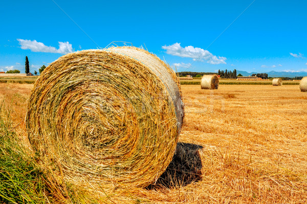 crop field in Spain with round straw bales after harvesting Stock photo © nito