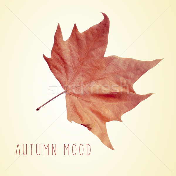 dry leaf and the text autumn mood Stock photo © nito