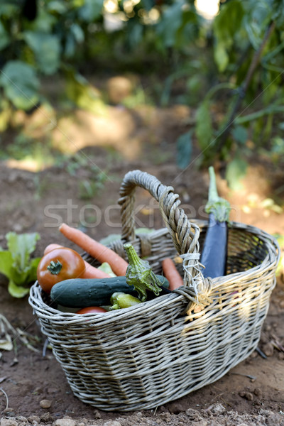 basket full of vegetables in an organic orchard Stock photo © nito