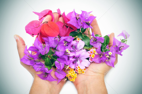 hands full of flowers Stock photo © nito