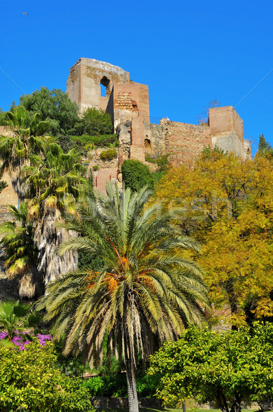 малага Испания мнение небе саду Palm Сток-фото © nito