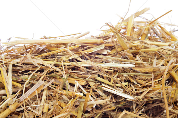 straw Stock photo © nito