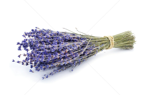 bunch of lavender flowers Stock photo © nito