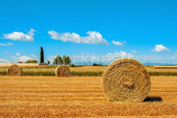 Wole dziedzinie Hiszpania słomy Zdjęcia stock © nito