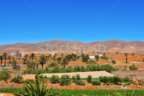 Fuerteventura, Canary Islands, Spain Stock photo © nito