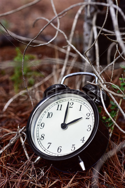alarm clock in the forest in autumn Stock photo © nito