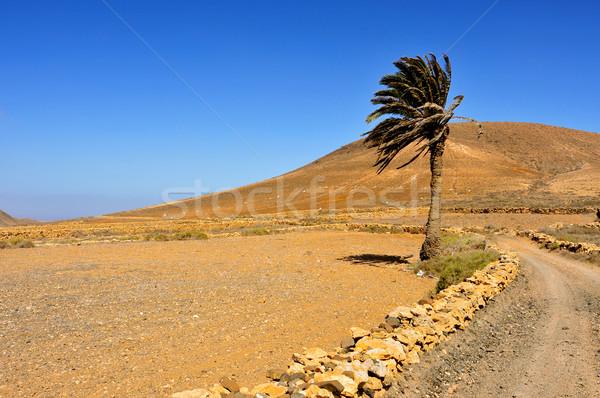 Tindaya Mountain in La Oliva, Fuerteventura, Canary Islands, Spa Stock photo © nito