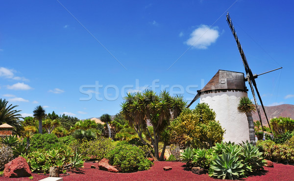 windmill in Antigua, Fuerteventura, Canary Islands, Spain Stock photo © nito