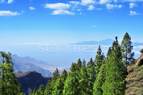 Tenerife eiland Spanje landschap oceaan Stockfoto © nito