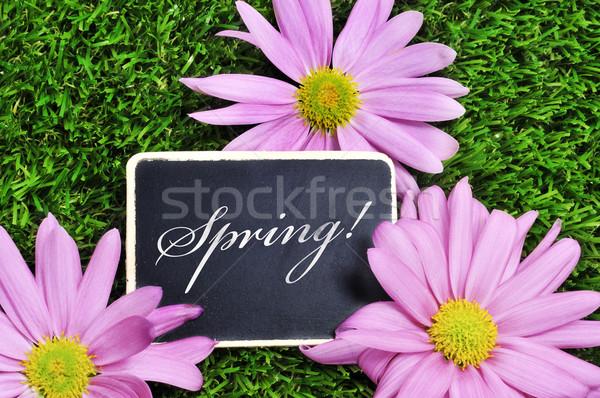 Primavera palavra escrito lousa grama rosa Foto stock © nito