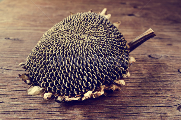 dried sunflower on a wooden surface Stock photo © nito