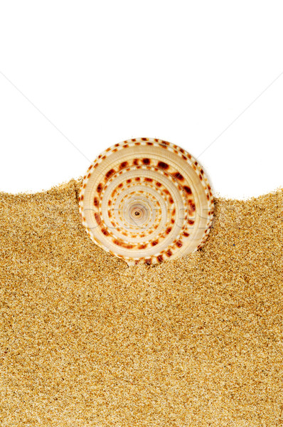 Stock photo: conch on the sand