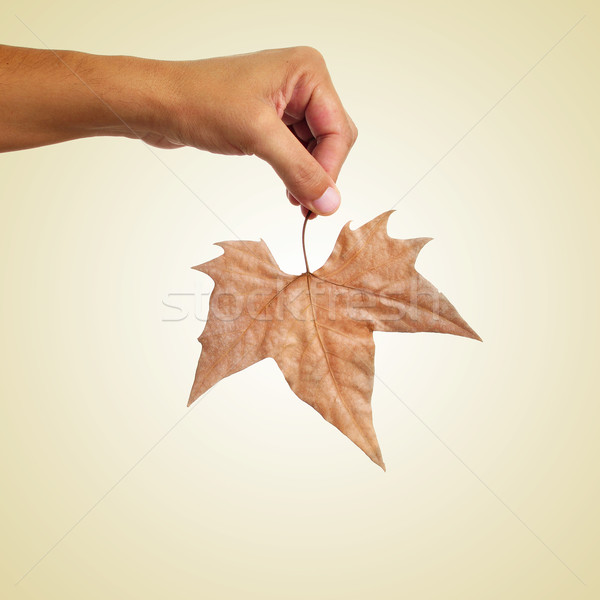 man holding an autumn leaf, with a retro effect Stock photo © nito