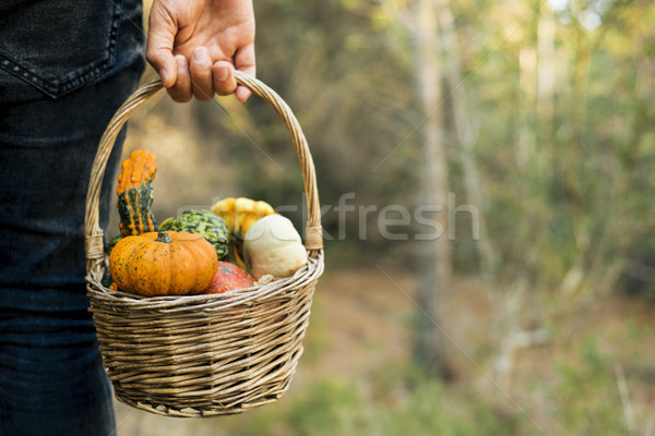 man with a basket full of pumpkins Stock photo © nito