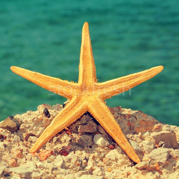 starfish on the beach Stock photo © nito