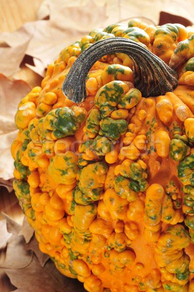 カボチャ クローズアップ 紅葉 食品 庭園 秋 ストックフォト © nito