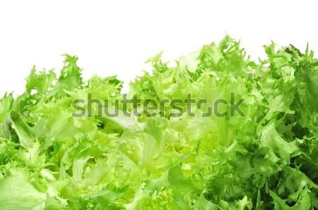 escarole endive Stock photo © nito