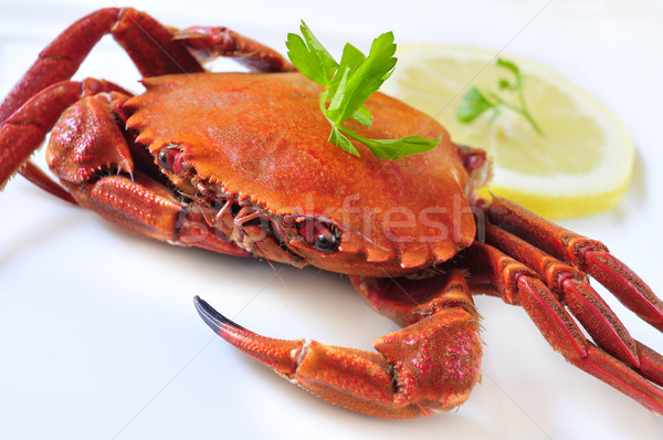 cooked velvet crab Stock photo © nito