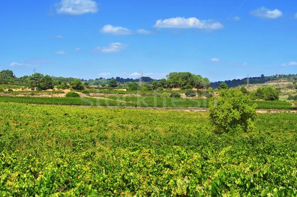 vineyard in Tarragona, Catalonia, Spain Stock photo © nito